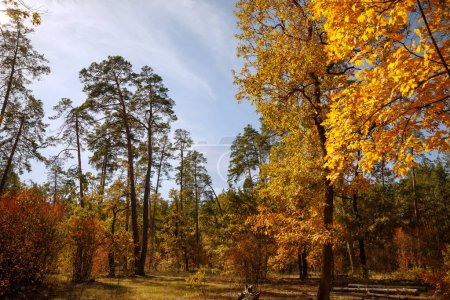 Photo for Trees with yellow and green leaves in autumnal park at day - Royalty Free Image