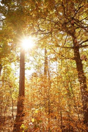 Photo pour Soleil, arbres aux feuilles jaunes et vertes dans le parc automnal le jour - image libre de droit