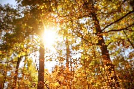 Foto de Sol, árboles con hojas amarillas y verdes en el parque autumnal día a día. - Imagen libre de derechos