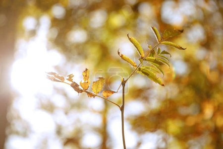Photo for Selective focus of trees with yellow and green leaves in autumnal park at day - Royalty Free Image