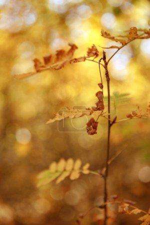 enfoque selectivo de árboles con hojas amarillas en el parque otoñal durante el día