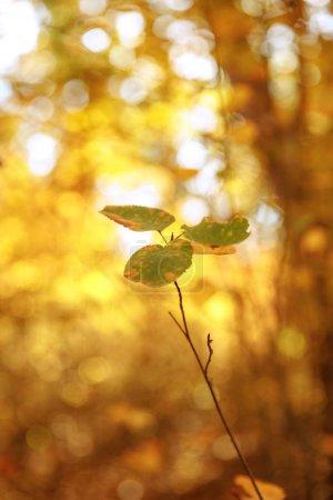 enfoque selectivo de árboles con hojas amarillas y verdes en el parque otoñal durante el día