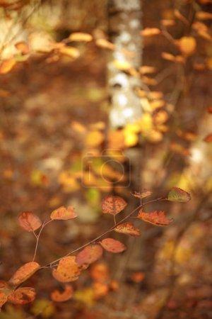 Photo pour Foyer sélectif des arbres à feuilles jaunes dans le parc automnal le jour - image libre de droit