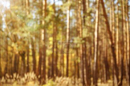 selektiver Fokus von Bäumen mit gelben und grünen Blättern im herbstlichen Park am Tag