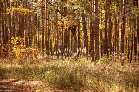 Foto de Árboles con hojas amarillas y verdes en el parque autumnal día a día. - Imagen libre de derechos