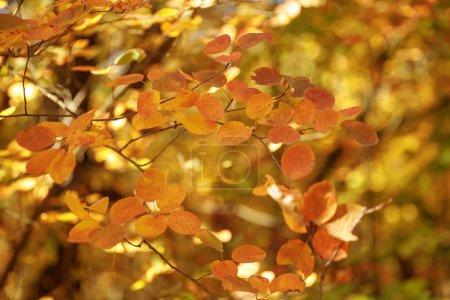 Photo pour La concentration sélective des arbres à feuilles jaunes dans le parc automnal le jour - image libre de droit