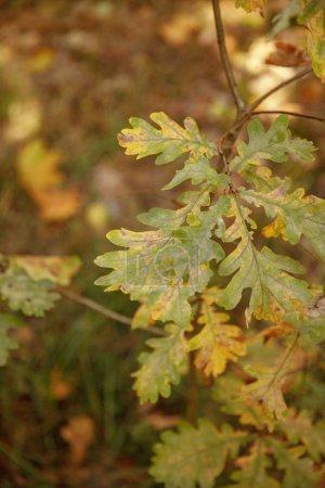 Photo pour La concentration sélective des arbres à feuilles vertes dans le parc automnal le jour - image libre de droit