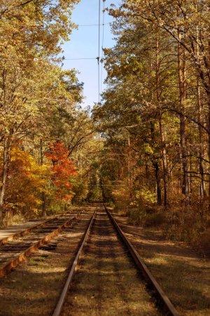Photo pour Arbres à feuilles jaunes et vertes et tramways dans le parc automnal le jour - image libre de droit