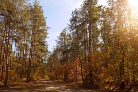 Photo for Sun, trees with yellow and green leaves in autumnal park at day - Royalty Free Image