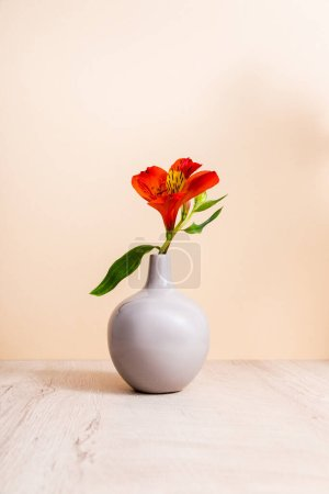 Photo for Red Alstroemeria in vase on wooden surface isolated on beige - Royalty Free Image