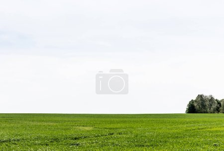fresh and green grass on field against cloudy sky