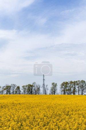 Foto de Flores silvestres amarillas florecientes en el campo cerca de los árboles contra el cielo azul. - Imagen libre de derechos