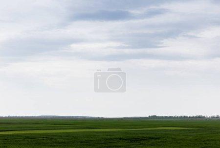 Foto de Campo con hierba verde y fresca contra el cielo nublado - Imagen libre de derechos