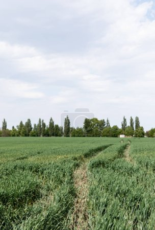 fresh grass near path and green trees in summer field