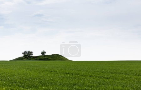 Photo for Green trees on hill near fresh grass in summertime - Royalty Free Image