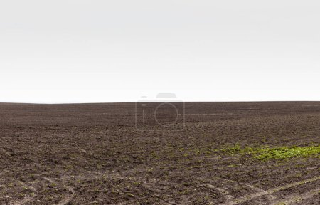 Photo for Grassy land near ground against grey sky - Royalty Free Image