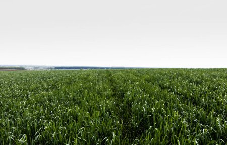 Photo for Fresh and green grassy field against sky - Royalty Free Image
