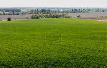 Photo pour Les arbres verts et les plantes près des champs herbeux - image libre de droit