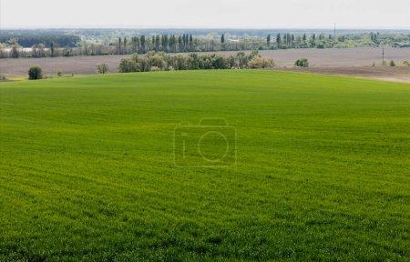 green trees and plants near grassy field