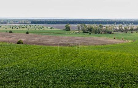 Photo pour Les arbres verts et les buissons près du champ herbeux contre le ciel - image libre de droit