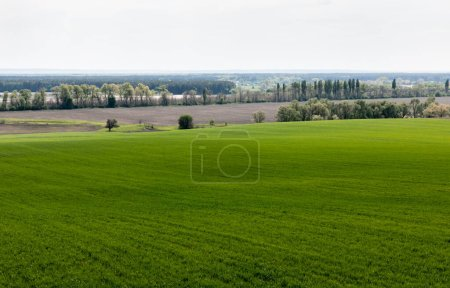 Photo for Fresh and green grassy field near trees and bushes - Royalty Free Image