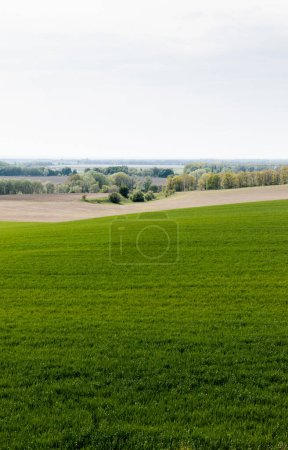 Photo for Fresh grassy field near trees and bushes - Royalty Free Image