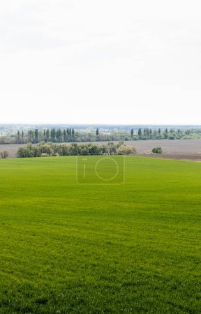 Photo for Fresh grassy field near green trees and bushes - Royalty Free Image