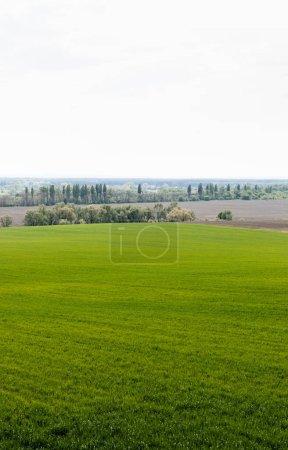 Photo pour Champ herbeux frais près des arbres verts et des buissons - image libre de droit