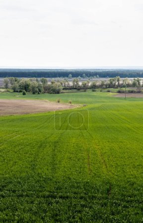 Photo for Grassy field near green trees and bushes against sky - Royalty Free Image