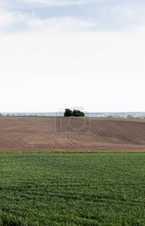 Photo for Grassy field near ground and green trees against sky - Royalty Free Image