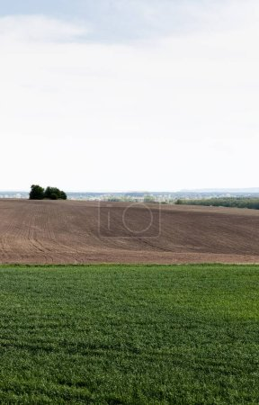 Photo for Grassy field near ground and green trees against cloudy sky - Royalty Free Image