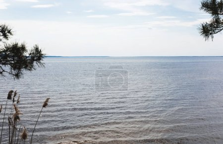 Photo for Reeds near tranquil sea against blue sky with clouds - Royalty Free Image