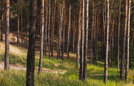 Photo pour Troncs d'arbres près de l'herbe verte et fraîche dans les bois - image libre de droit