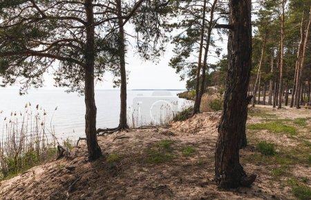Photo pour Arbres près de l'herbe verte et le lac tranquille - image libre de droit