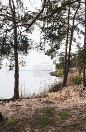 Photo pour Arbres verts près roseaux et lac tranquille - image libre de droit