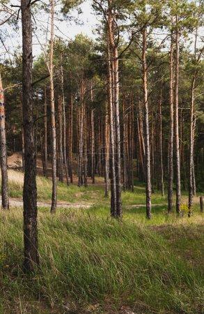Photo pour Herbe verte et fraîche près des arbres dans la forêt - image libre de droit
