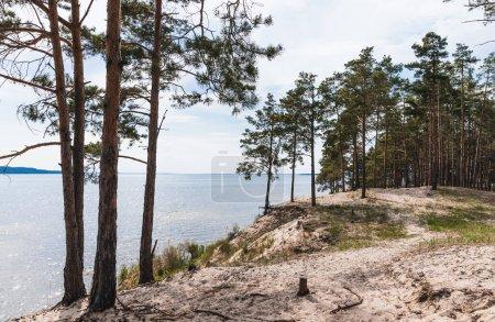 Photo pour Arbres verts près du sable et du lac tranquille - image libre de droit