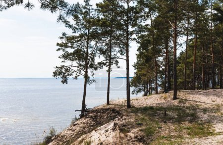 Photo pour Étang tranquille près des arbres verts dans les bois - image libre de droit