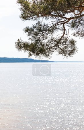 Photo for Sunshine on green pine tree near tranquil sea in summer - Royalty Free Image