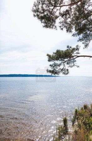 sunshine on green pine tree near tranquil lake in summer