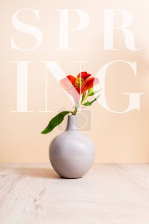 Photo for Red Alstroemeria in vase on wooden surface near spring lettering on beige - Royalty Free Image