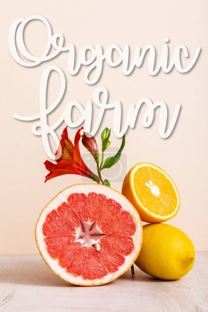 Photo for Floral and fruit composition with red Alstroemeria and citrus fruits near organic farm lettering on beige - Royalty Free Image