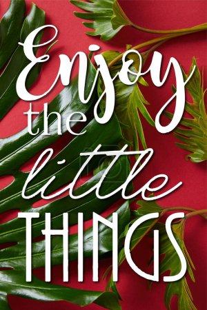 vista superior de las hojas verdes tropicales sobre fondo rojo con la ilustración de disfrutar de pequeñas cosas