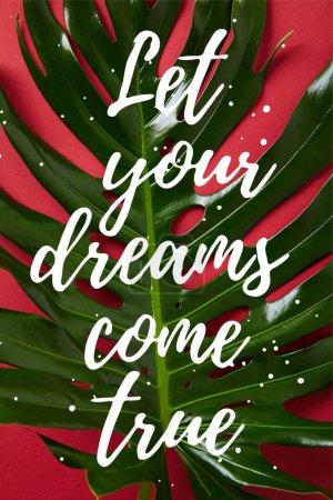 Photo pour Vue du dessus de la feuille verte tropicale sur fond rouge avec laissez vos rêves se réaliser illustration - image libre de droit