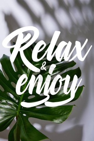fresh tropical green leaf on white background with relax and enjoy illustration