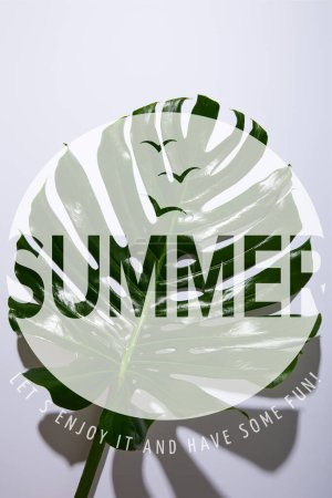 fresh tropical green leaf on white background with summer illustration