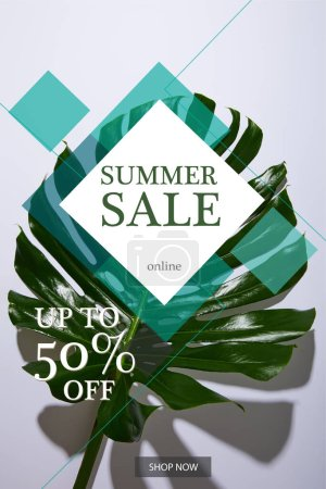 fresh tropical green leaf on white background with summer sale illustration