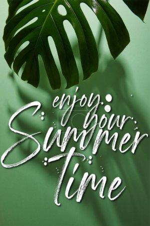 fresh tropical leaf on green background with enjoy your summertime illustration
