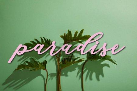 Photo pour Feuilles vertes tropicales fraîches sur fond vert avec illustration paradis - image libre de droit