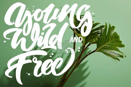Photo pour Feuilles vertes tropicales fraîches sur fond vert avec illustration jeune, sauvage et gratuite - image libre de droit